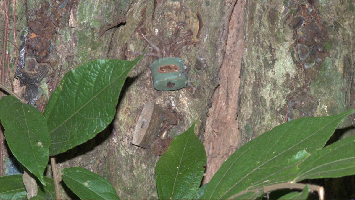 Gabon - 01817 - 28 mai 2011 à 13h10_1.jpg